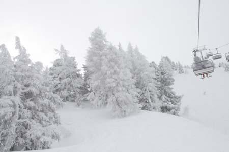 Австрия, сказочный лес