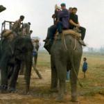 Сафари на слонах в Читван
