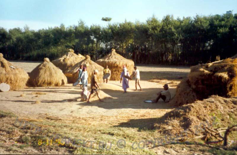 Ручной сельскохозяйственный труд