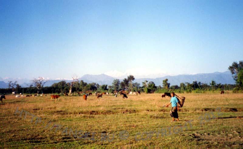 Терраи на фоне Аннапурны