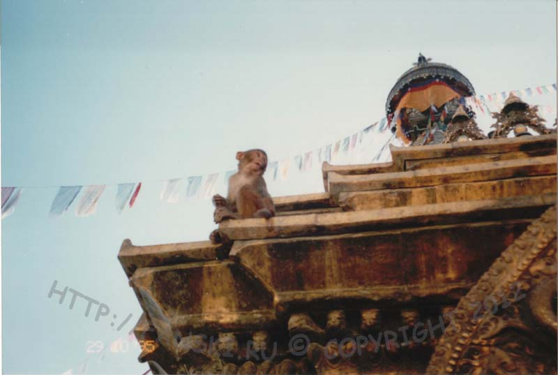 Обезъянка на храме Сваямбунатх, Непал