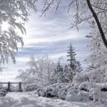 winter-rest