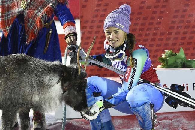Тина Мазе и её олень Виктор, Леви, 15 ноября. 2014.