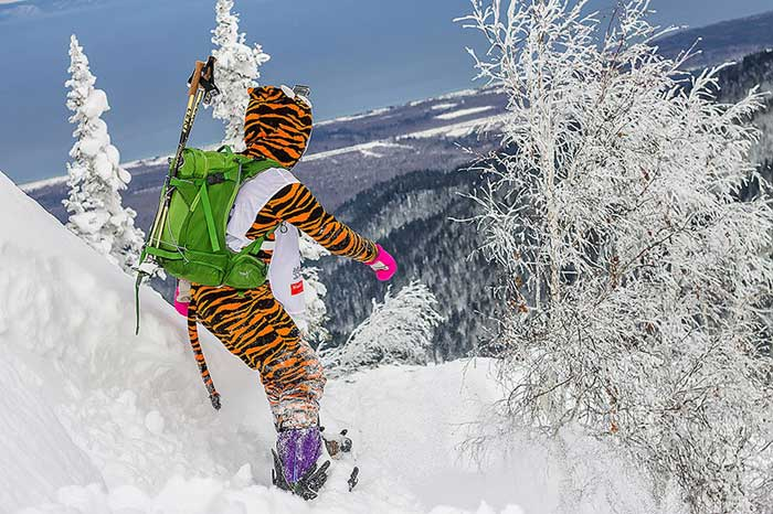 kval_tigr